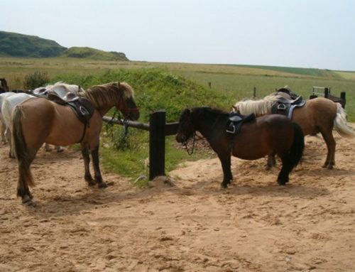 Islay Pony Trekking