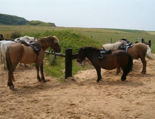 Islay Pony Trekking